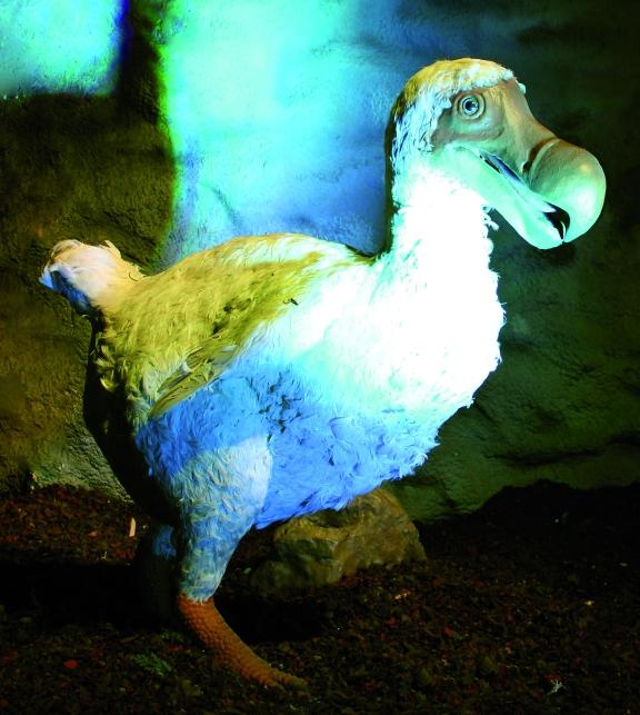 Ice Age - Dodo V2 RECADR+ëcarr+®